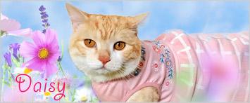猫の暮らしマーガレットワンピースクールキャット