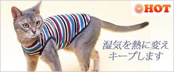 猫の暮らしウォームマルチボーダーキャット