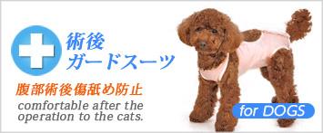 犬と生活術後ガードスーツ