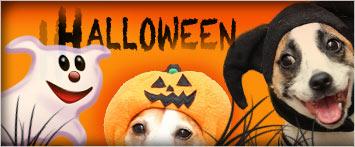 犬と生活ハロウィンハット