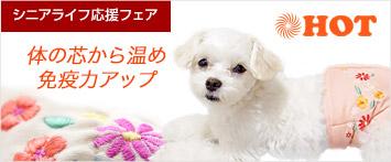 犬と生活腹巻き花飾り