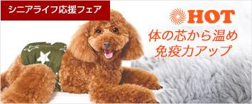 犬と生活腹巻きスター・フラワー