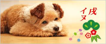 犬と生活犬耳ハット