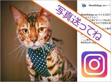 犬と生活instagram
