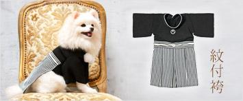 犬と生活紋付袴