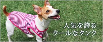 犬と生活クールマリンボーダー