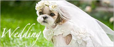 犬と生活ウェディングドレス
