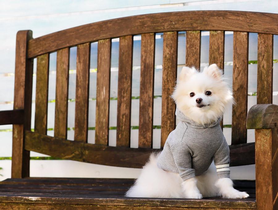 犬と生活 マリンパーカー 【犬服 夏服】