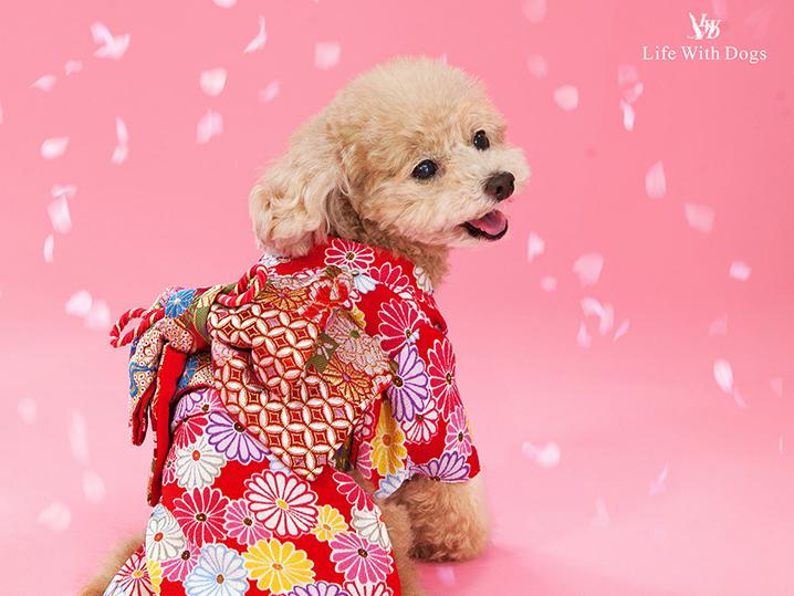 犬と生活 お振袖 【犬服 冬服 小型犬】