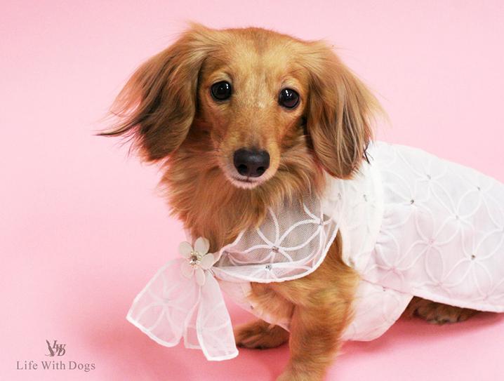 犬と生活 ジュエルドレス 【犬服 夏服】