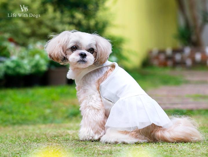 犬と生活 重ね着ワンピース クールフリル 【犬服 夏服】
