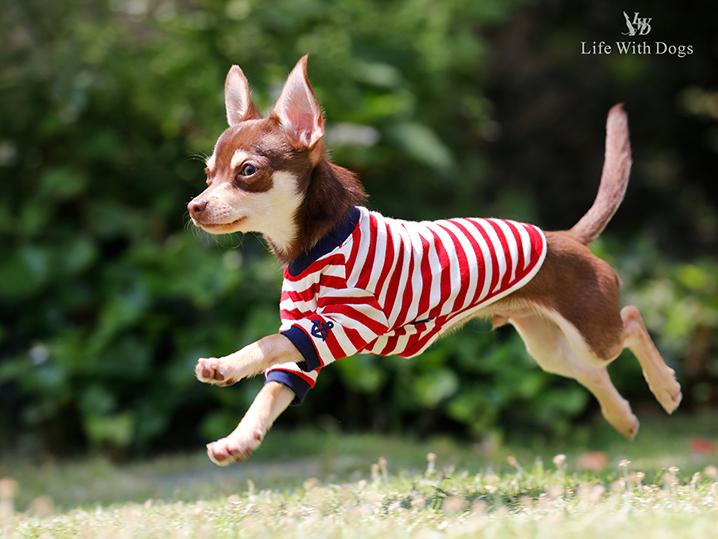 犬と生活 ロングスリーブボーダーT