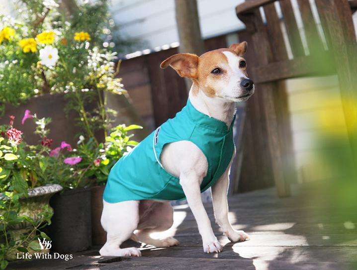 犬と生活 アンチポランウィンドブレーカー 【犬服 夏服 花粉対策】