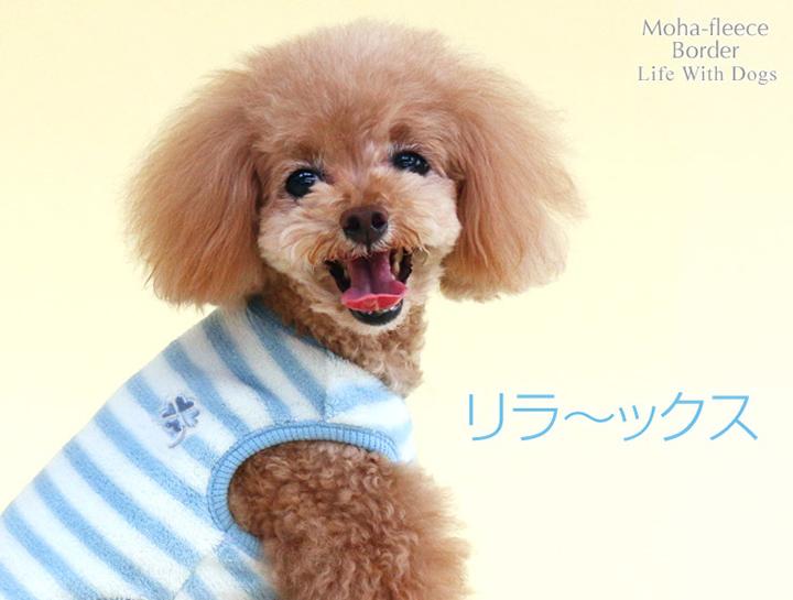 犬と生活 モハフリースビッグボーダー