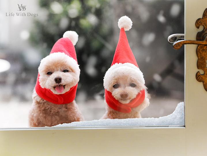 犬と生活 猫の暮らし サンタハット
