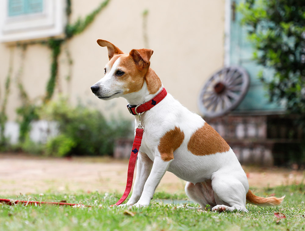 犬と生活 デニム カラー / リード