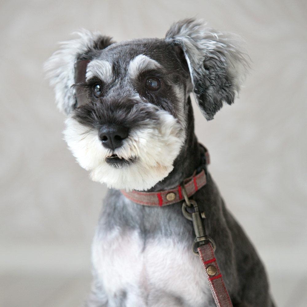 犬と生活 デニムステッチ カラー / リード