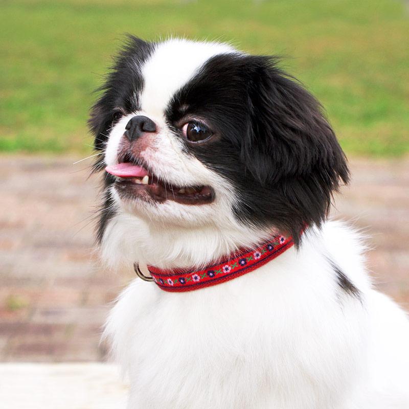 犬と生活 フラワー カラー / リード