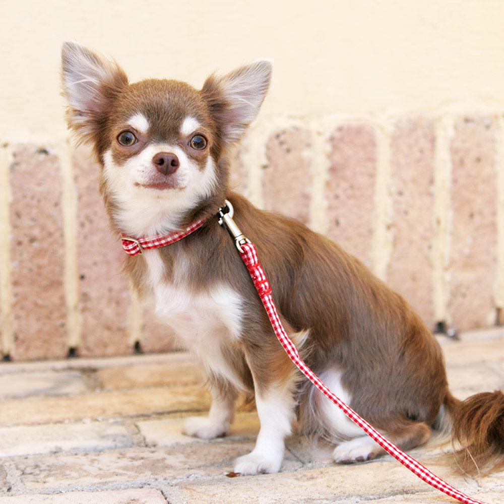 犬と生活 ギンガム カラー / リード
