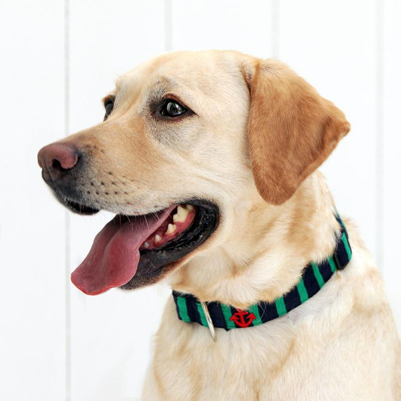 犬と生活 Lアンカーボーダー カラー / リード