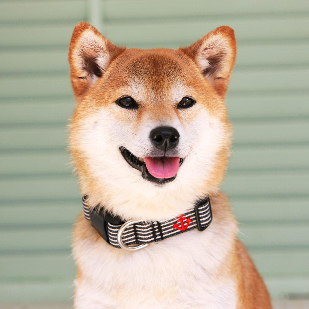 犬と生活 Lヒッコリー カラー / リード