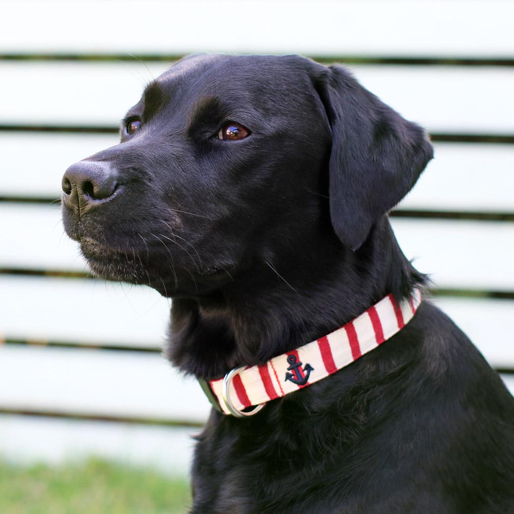犬と生活 Lマリンボーダー カラー / リード