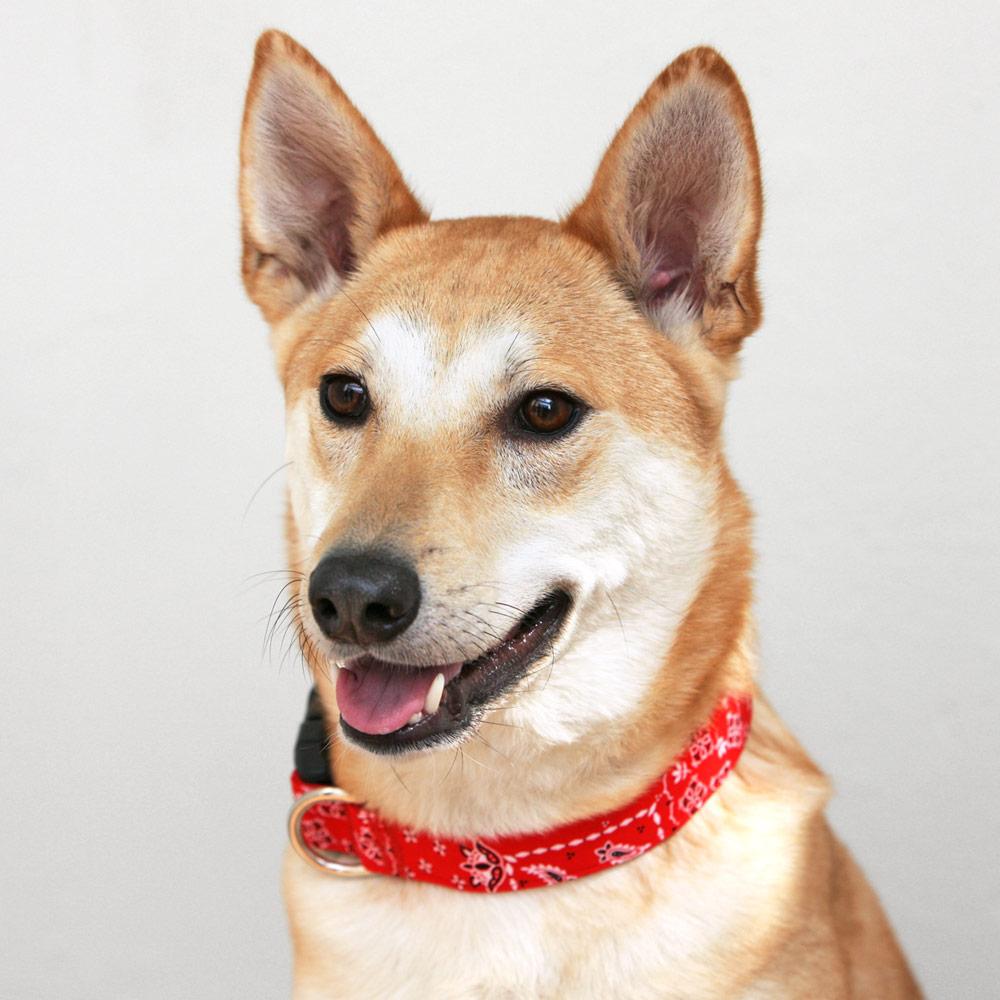 犬と生活  Lペイズリー カラー / リード