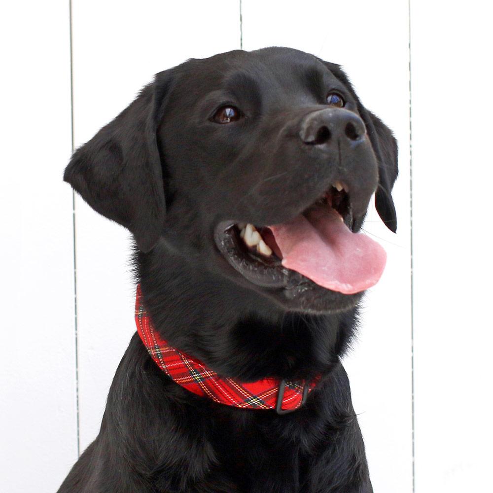 犬と生活  Lタータンチェック カラー / リード