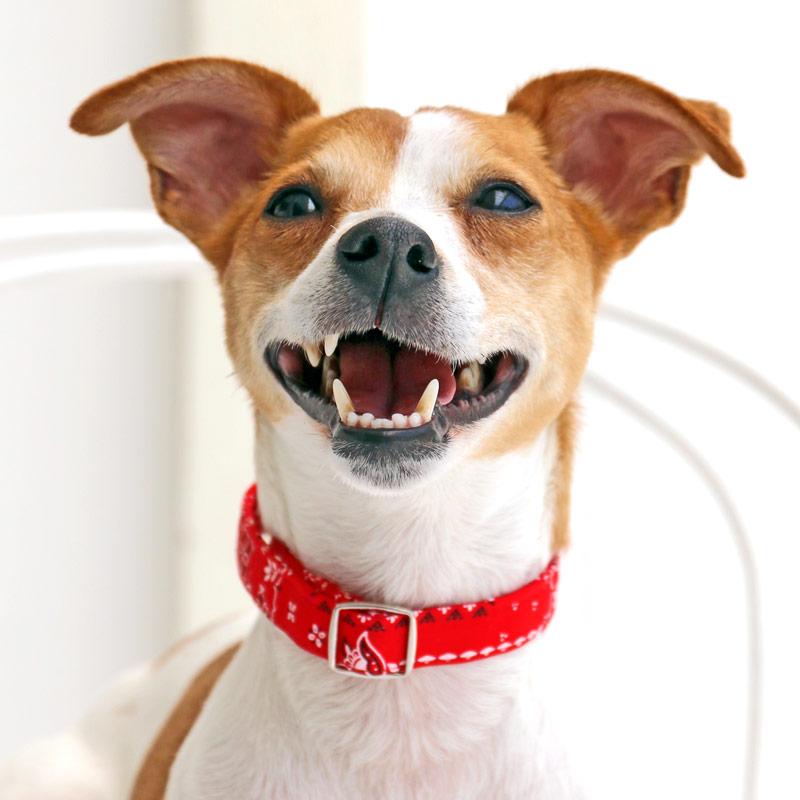 犬と生活 ペイズリー カラー / リード