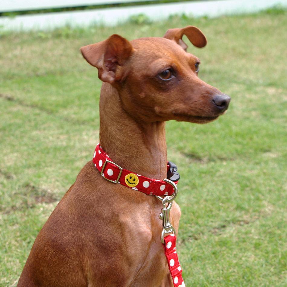 犬と生活 スマイルドット カラー / リード