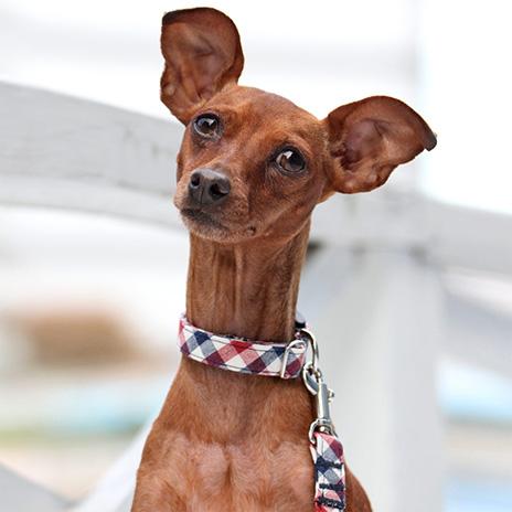 犬と生活 トリコチェック カラー / リード