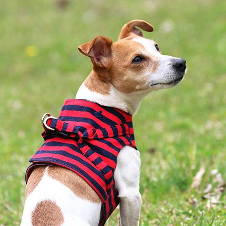犬と生活 ボディハーネスアンカーボーダー
