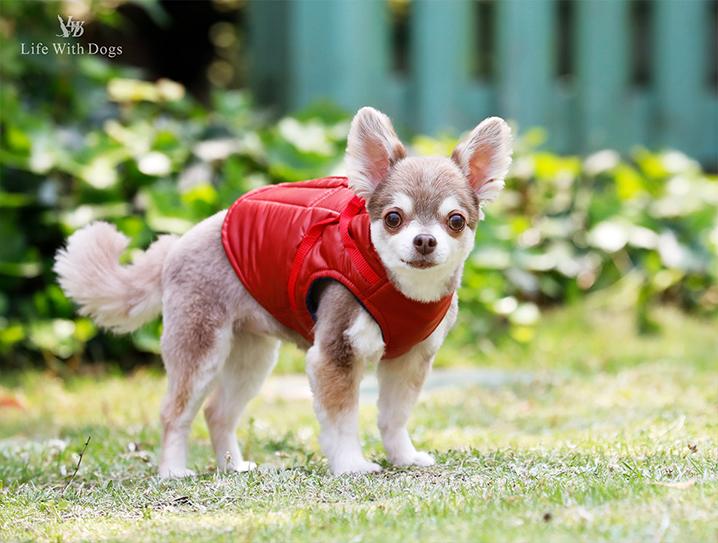 犬と生活 ボディーハーネスダウンロング
