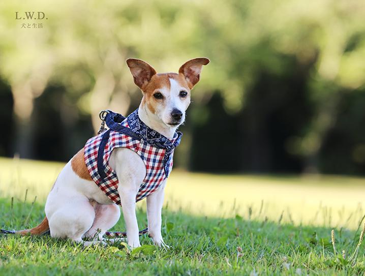 犬と生活 ボディハーネス トリコチェック 【ハーネス,ベスト型,可愛い】