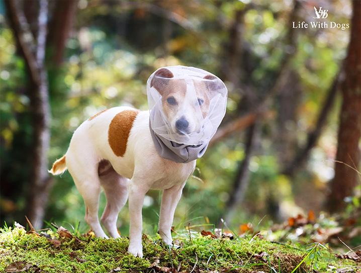 犬と生活 フェイスカバー
