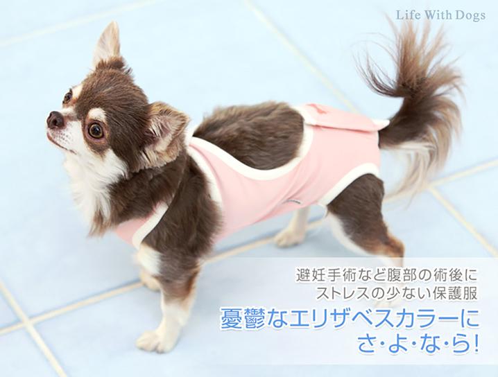 犬と生活 術後ガードスーツドッグ