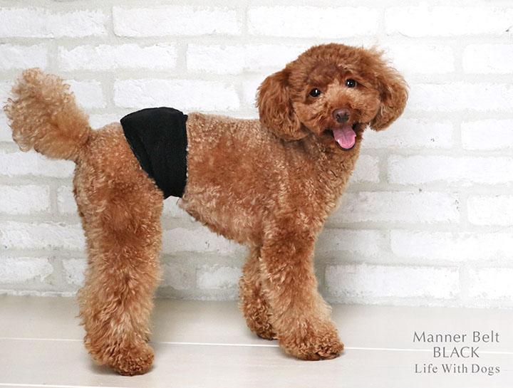 犬と生活 マナーベルト ブラック 【マーキング防止】