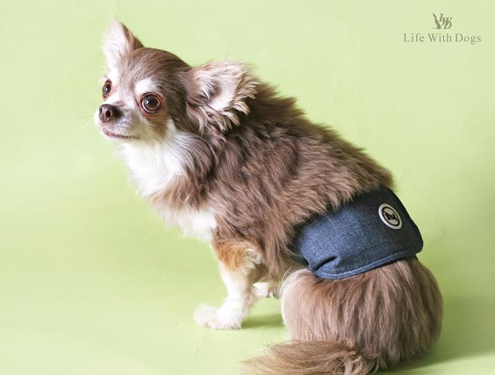 犬と生活 バグガードマナーベルト
