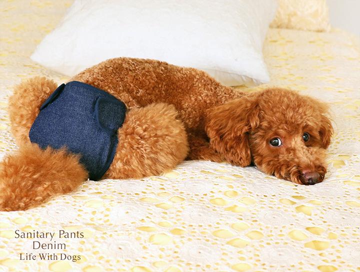 犬と生活 サニタリーパンツ デニム