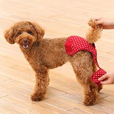 犬と生活 サニタリーパンツ ドット