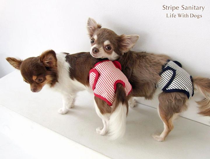 犬と生活 ストライプサニタリー