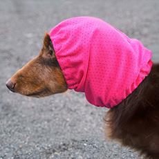 犬と生活 雨の日スヌード