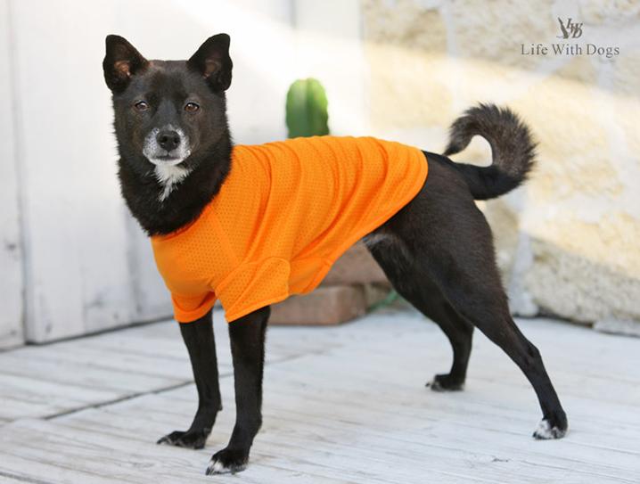 犬と生活 雨の日Tシャツ 柴犬 中型犬 レインコート