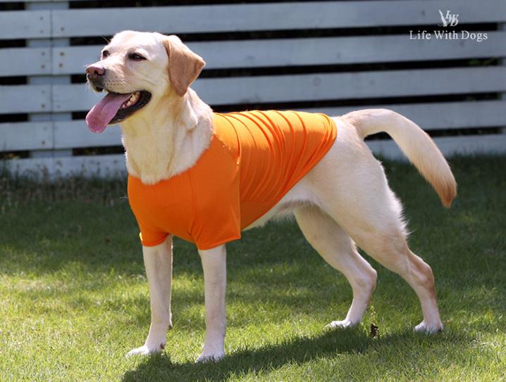 犬と生活 雨の日Tシャツ 大型犬 レインコート