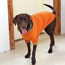 Rパーカー 大型犬のレインコートなら犬と生活