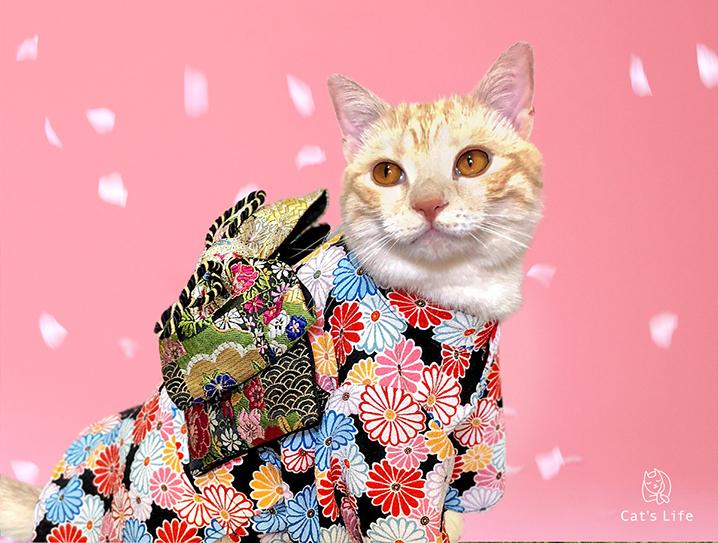 猫の暮らし 猫用お振袖