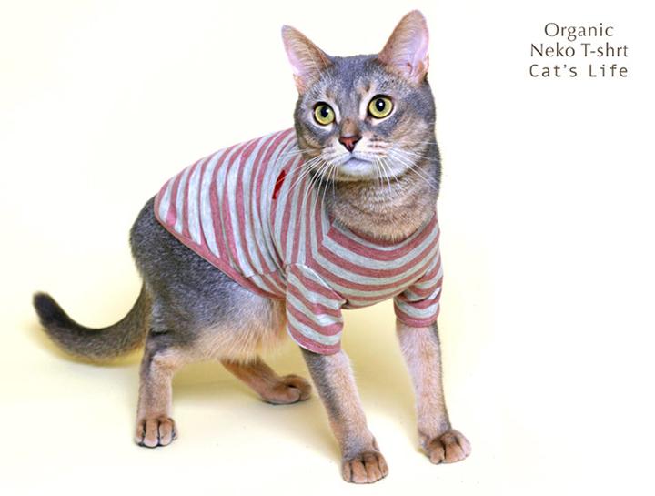 オーガニックネコTシャツ 猫の暮らし 猫 保護服