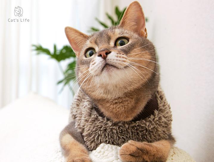 猫の暮らし ボアフリ―スキャット 霜降り