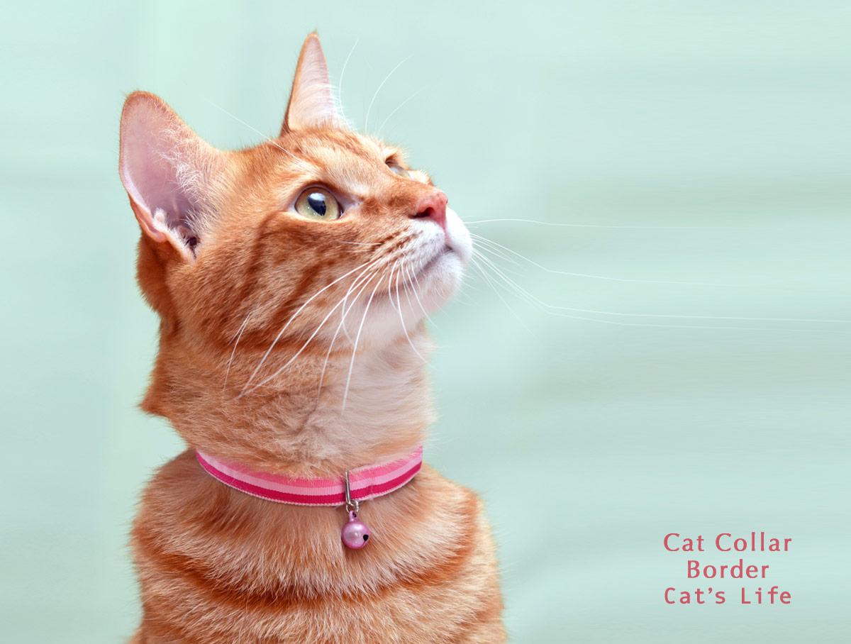 猫の暮らし キャットカラー ボーダー