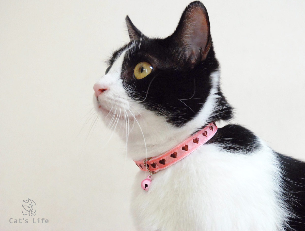 猫の暮らし キャットカラー ハート